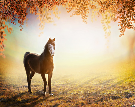 a meadow: beautiful  horse stands on sunny autumn meadow with hanging branches of trees with colorful foliage over fog nature background.