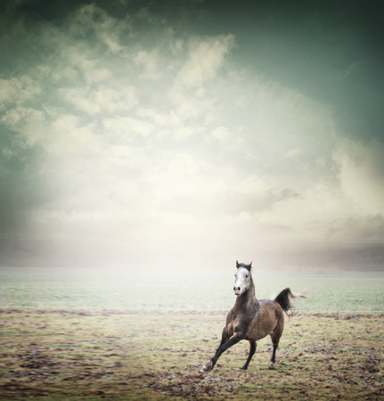 light brown horse: Young horse running on pasture and sky background, toned Stock Photo