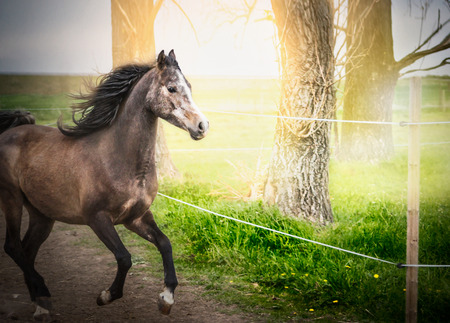 electric fence: Young horse running on paddock with electric fence