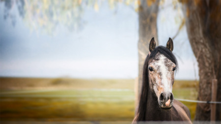 horse chestnuts: horse standing and looking at camera over nature background wit tree and foliage, banner Stock Photo
