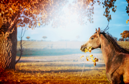 keeps: Horse running and  keeps in mouth a branch with leaves  on beautiful autumn nature background with tree and sky Stock Photo