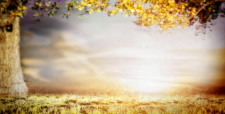 tall: Blurred nature background with big tree, grass and beautiful sky, banner Stock Photo