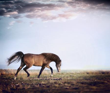 red horse: Arabian stallion horse running trot on autumn pasture Stock Photo