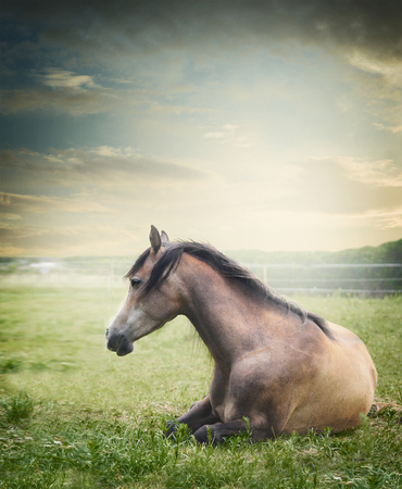 lies down: Horse lies and  resting on summer pasture