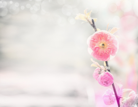 Spring nature background with pink pale almond flowers