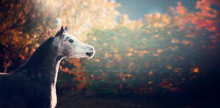 wonderful: beautiful arabian horse with Whitehead on wonderful nature background