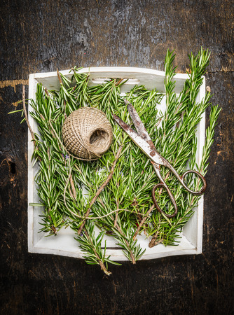 skein: Rosemary plant with a skein of rope and old scissors on rustic wooden background , top view