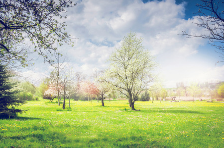 garden lawn: Spring park or garden with blooming fruit trees, green lawn and sky. Nature background