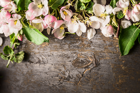 Spring flowers of fruit trees on dark wooden background, top view, border