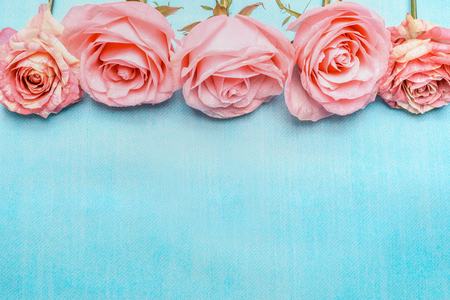 Pink pale roses border on blue background, top view. Stock Photo