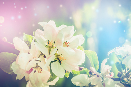 Beautiful nature background with spring blossom and bokeh, toned