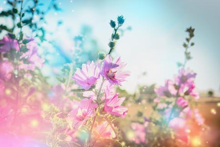 Estate natura sfondo floreale con fioritura malva