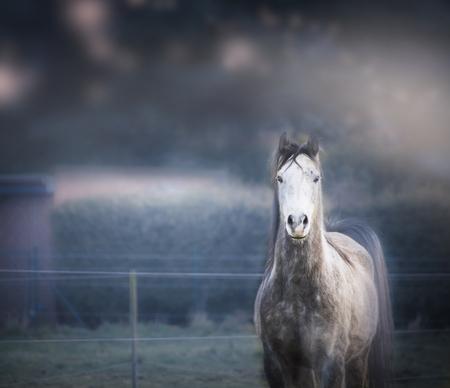 gray horse: Gray horse on dark nature background