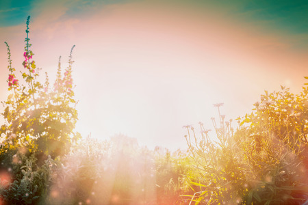 Natur background with Flowers garden and summer sun rays.