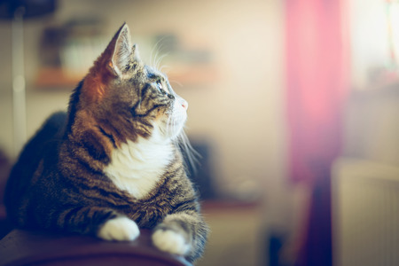 home life: Domestic cat in home interior