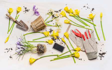 flowers garden: Flat lay with spring flowers, various garden tools:  plant sign , shovel , pot and work gloves  on white wooden background, top view. Gardening concept. Stock Photo