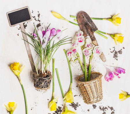 dirt background: Beautiful spring flowers with pot, garden sign and shovel with pot on white wooden background, top view. Gardening concept.