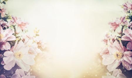pfingstrosen: Schöne Blumen in Pastellfarben Hintergrund, Banner Lizenzfreie Bilder