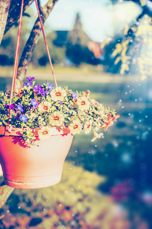 hanging flowers: Hanging flowers pot with petunia on summer garden background