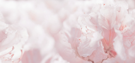 Pink pastel floral romantic background and bokeh, banner Stok Fotoğraf