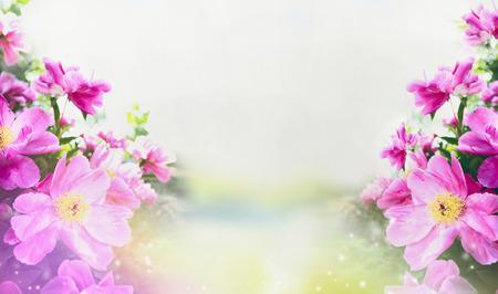 Fond de jardin de fleurs avec gros plan de pivoines roses, bannière