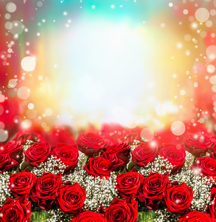 red rose bokeh: Red roses background with sun light and bokeh. Roses garden. Floral border Stock Photo