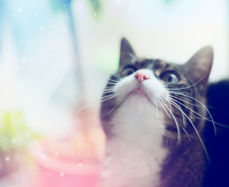 nose close up: cats head with a pink nose and mouth, close up portrait Stock Photo