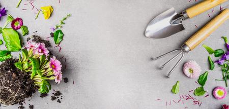 sfondo giardinaggio con attrezzi da giardino a mano e fiori d'estate pianta su sfondo grigio pietra, vista dall'alto, posto per il testo, bandiera