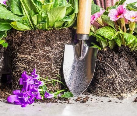 Handschaufel und Gartenblumen Vergießen auf grauem Stein Hintergrund, Nahaufnahme
