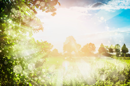 Lovely summer nature background with trees foliage , sky, field and sun rays. Summer Country landscape