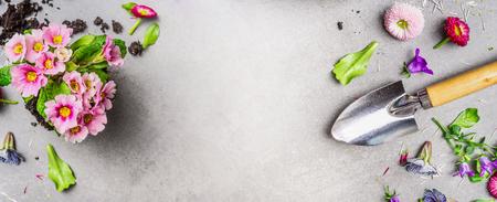Flores de jardín colorido con suelo y cuchara de jardín sobre fondo de piedra gris, vista superior, lugar para el texto. Concepto de jardinería Foto de archivo