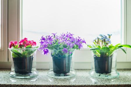 Potted plants: Lovely home decoration with grass flowers pots on windowsill Stock Photo