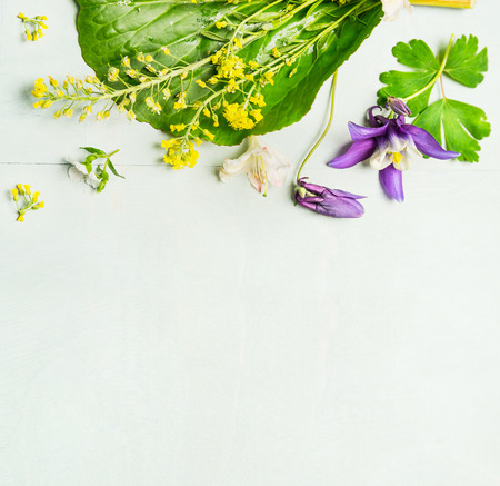 arrangements: Spring or summer garden flowers with leaves on light green background, top view, place for text, border