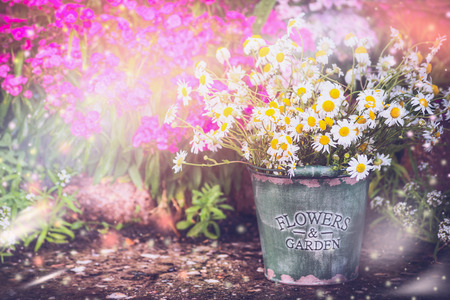 flowers garden: Lovely garden. Flowerbed in summer garden with bucket and daisies bunch. gardening background, outdoor. Wild daisies  over flowers garden background.