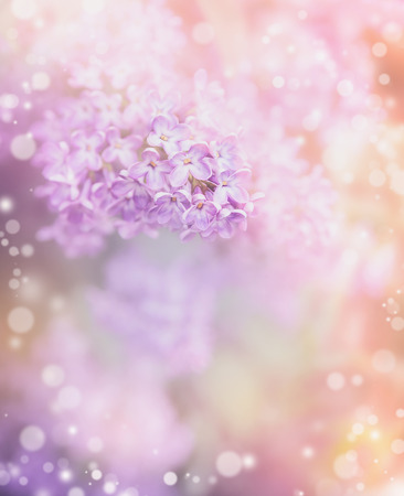 april flowers: Lilac flowers on beautiful bokeh background. Romantic pastel floral border Stock Photo