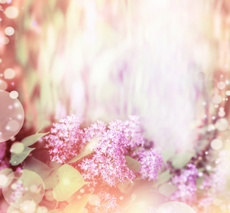 lilac flowers: Floral nature background with pretty lilac flowers. Lilac blooming summer background. Stock Photo
