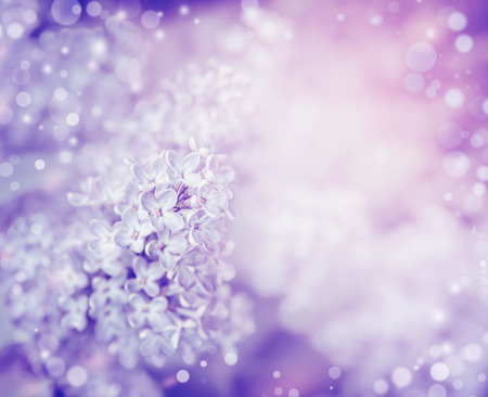 lilac flowers: Beautiful flowers of lilac , close up. Lilac blooming background. Light pastel floral border Stock Photo
