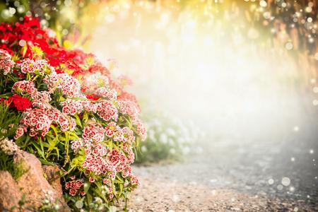 Beautiful flowers garden background. Turkish carnation flowers on flowers bed. Outdoor garden or park background