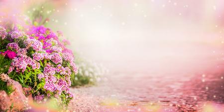 Garten Hintergrund mit rosa Blumen im Garten, Banner. Floral Außen Hintergrund mit Nelken