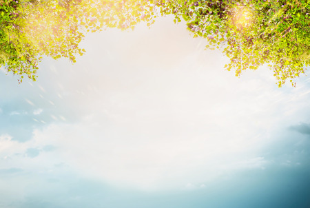 Summer foliage over sky background. Sun light in green leaves.