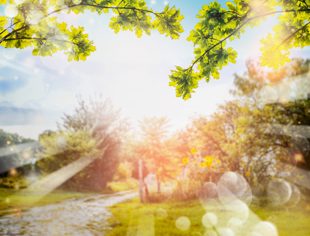 summer trees: Green foliage over Country nature background with sun rays and bokeh. Summer countryside nature background