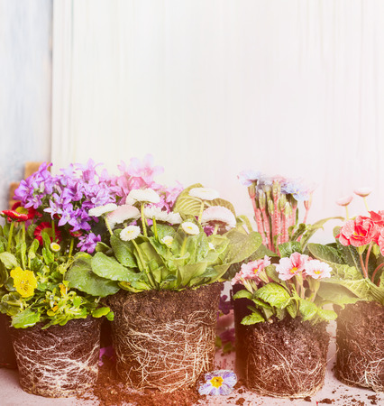 potting: Various plants and flowers for potting. Garden or balcony flowers over light background Stock Photo