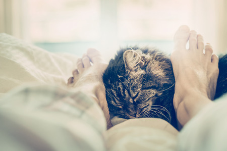 Cat in bed. Women's feet cuddle cat muzzle.