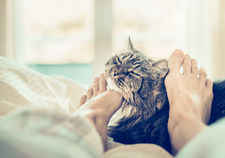 smooch: Home scene with cat in bed. Womens feet are scratching the neck of the cat Stock Photo