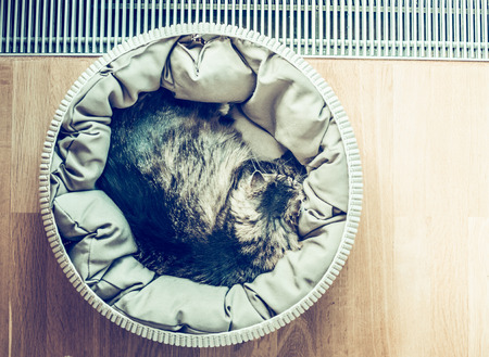 curled up: Cat sleeping curled up in basket  near a window on parquet floor, top view, place for text, retro toned Stock Photo