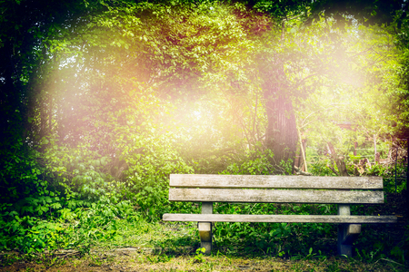 Old bench in summer park or forest.  Outdoor  nature background with wooden bench.