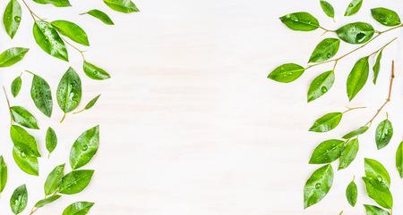 Grens of banner van groene bladeren met dauw druppels op een witte houten achtergrond, bovenaanzicht. Ecologie, organisch of natuur achtergrond. Groene bladeren patroon. Stockfoto
