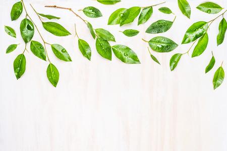 緑の葉露滴、枠線またはパターンで白い木製の背景、トップ ビューで。 生態学、有機または性質の概念