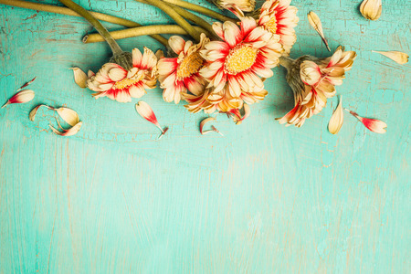 Beautiful flowers bunch on a turquoise shabby chic background , top view, border. Festive greeting or invitation card with gerbera flowers. Stock Photo