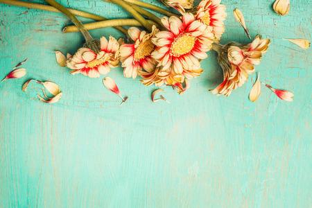 Hermosas flores montón en un fondo chic lamentable de turquesa, vista superior, frontera. Tarjeta festiva del saludo o de la invitación con las flores del gerbera.